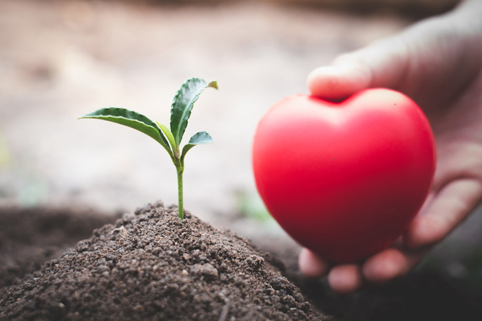 seedling growing out of small dirt mound with a hand holding a red heart next to it - continuum of care